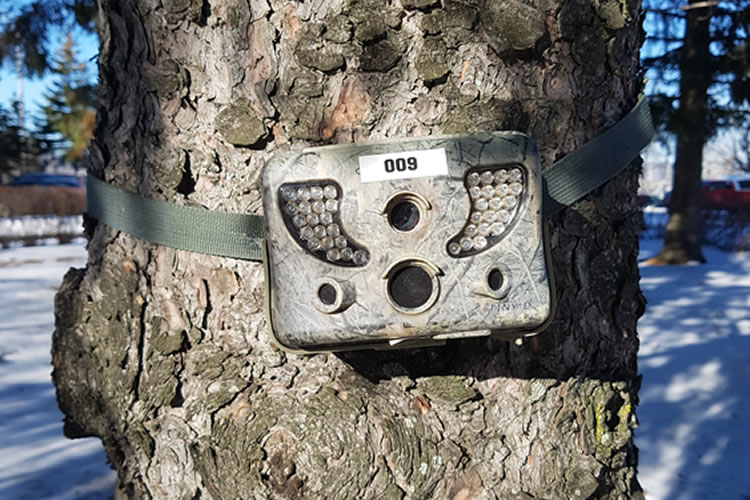 A camera attached to a tree.