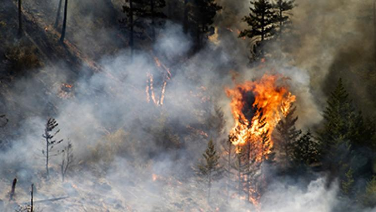 A glimpse into the future of the boreal forest: less frequent but more aggressive fires