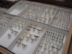 A display case showing arthropod specimens
