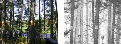 Example of a TLiDAR scan taken in Newfoundland forest environment.