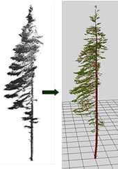 Co-registered scans of a balsam fir and its 3-D representation build with L-Architect.
