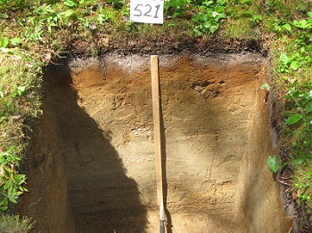 through the soil profile in forested watersheds better understandingForest Soil Profile