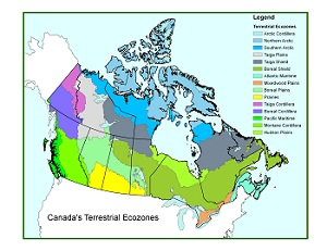 Forest classification | Natural Resources Canada