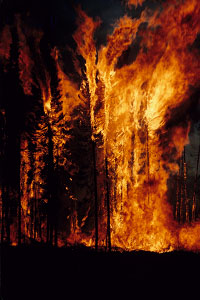 Forest fire. Photo: Mike Flannigan
