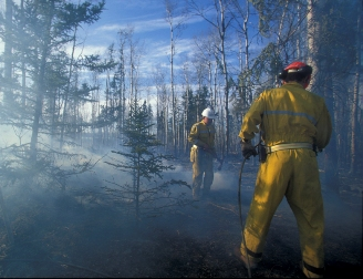 Firefighters working in the forest