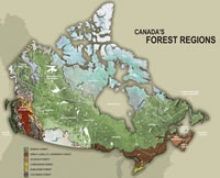 Canada's forest regions. Boreal forest, Great Lakes-St. Lawrence forest, Acadian forest, Carolinian forest, Subalpine forest, Columbia forest, Montane forest, Coastal forest. Nonforest: tundra, grasslands.