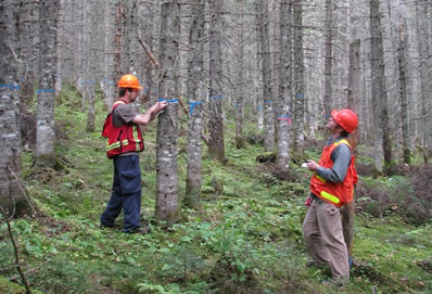 Photo of foresters measuring and assessing the quality of trees at the Green River pre-commercial thinning trial
