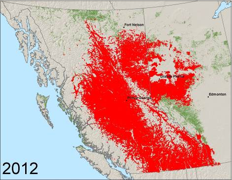 Observed presence of mountain pine beetle from 1999 to 2012.