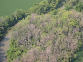 Aerial photo of an ash stand severely damaged by emerald ash borer