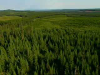 Video: The boreal forest