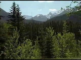 Video - Mountain pine beetle and fire in our forests