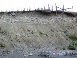 FIGURE 14b: Active bluff erosion, Middle Cove, NL.
