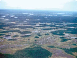 Photo showing Taiga Forest ecozone - aapa (ribbon fen) and black spruce assemblage
