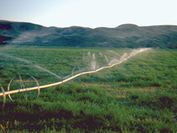 FIGURE 16: Irrigation on the Prairies (Frenchman River valley, southwestern Saskatchewan).