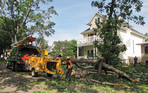 Photo of an urban forestry crew mulching a downed tree in Edmonton