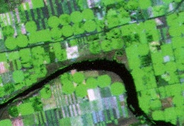 Crop circles seen in farmers' fields around the world (Landsat TM)