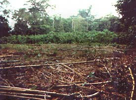 Clearing of forest in Costa Rica