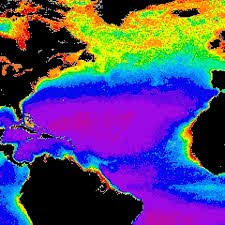 Image showing phytoplankton concentration