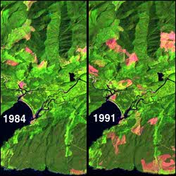 Two images showing forest clearcutting between 1984 and 1991