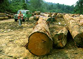 Extraction of wood in tropical forest
