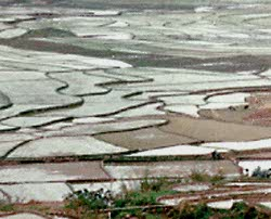Flooded rice paddies in Asia