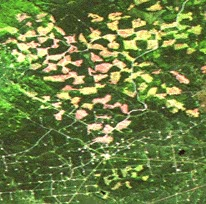 This image shows a region of Alberta where the forest is interspersed with geometric areas. There is sectors of cutting, where the forest has been eliminated across the region.