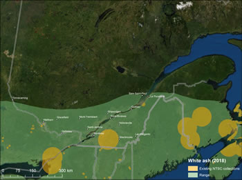 Figure 9 – Map of Quebec showing white ash range and existing seed collections. Legend shows existing NTSC collections and range in 2018.