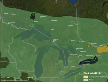 Figure 4 – Map of Ontario showing black ash range and existing seed collections. Legend shows existing NTSC collections and range in 2018. Legend shows existing NTSC collections and range in 2018.