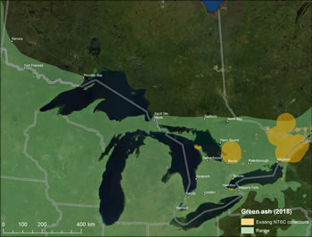 Figure 5 – Map of Ontario showing green ash range and existing seed collections. Legend shows existing NTSC collections and range in 2018.