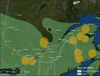 Figure 7 – Map of the Maritimes showing black ash range and existing seed collections