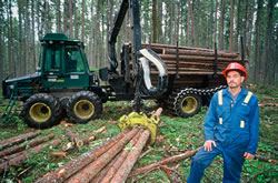 Forestry worker wearing a hard hat standing next to a stack of felled trees on the ground in front of lumber truck.