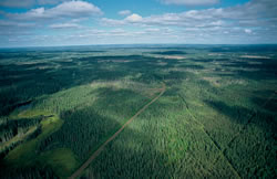 Aerial photograph of Canada's boreal forest