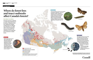 How fire and insect outbreaks will shape Canada's forests