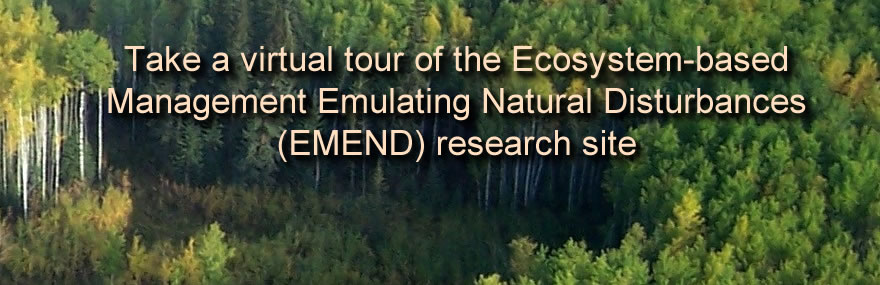 Visit the site of the world's largest forest science research project, located in the boreal forest of Alberta, Canada