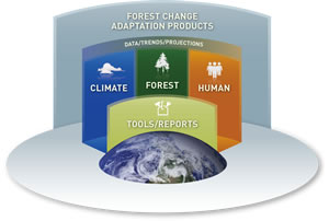 Image showing a multi-level platform that symbolizes the Forest Change structure and adaptation products.