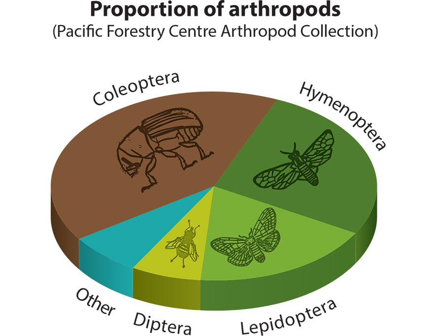 Infographic displaying the percentage of specimens for each Order presently in the collection, described below.