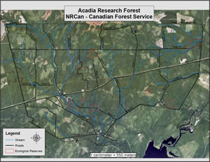 Map of the Acadia Research Forest showing forest area with blue lines for streams, black lines for roads, and red outlines for the ecological reserves.