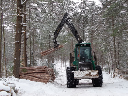 A logging machine moves recently cut-down trees into a pile beside a road.