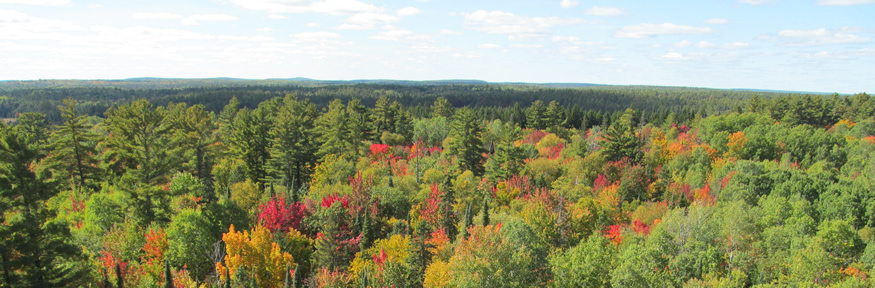 Aerial view of Petawawa Research Forest in the fall.
