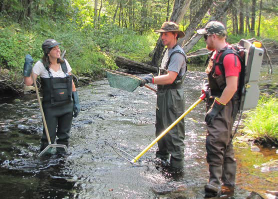 Three students wearing hip-waiters stand in a creek with one leading a demonstration of electrofishing.