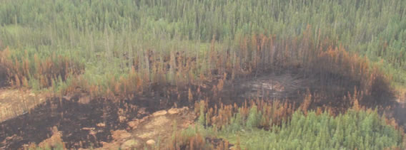 Preferential burning in peatlands and lowland conifer compared to mixedwood uplands. Wood Buffalo National Park, June 2012