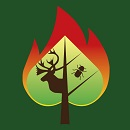 Image showing the shape of a spade, representing a tree as well as a leaf and containing the silhouette of a caribou and an insect, surrounded by an enlarged flame.