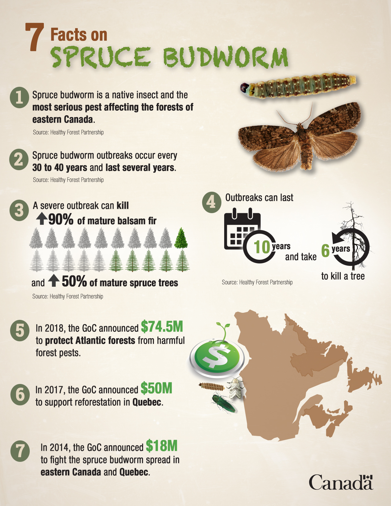 7 facts on Spruce Budworm