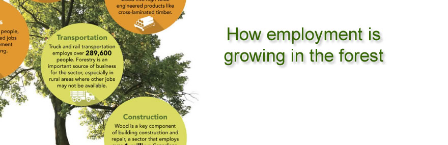 How employment is growing in the forest – Infographic