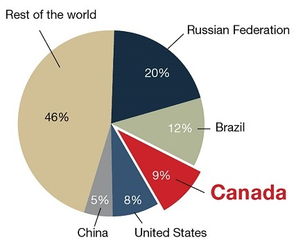 Diagram of a pie chart showing where the word's forests are, by percentage (Russia 20%, Brazil 12%, Canada 9%, US 8%, China 5% and rest of the world 46%).