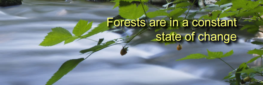 Forests are in a constant state of change
