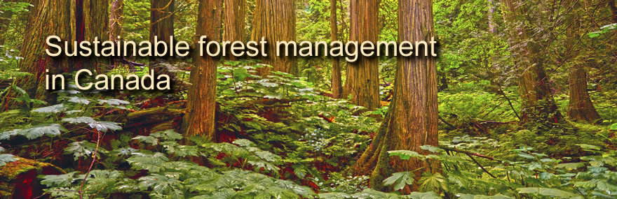 Sustainable forest management in Canada