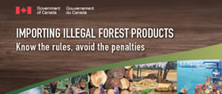 Importing illegal forest products (factsheet)