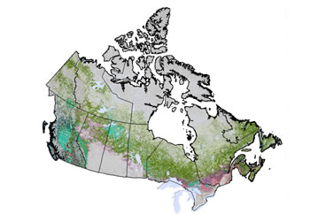 Map: Forest composition across Canada