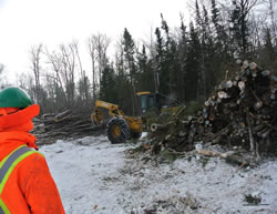 Winter harvesting at the Petawawa Research Forest, heavy equipment and stacked timber logs.